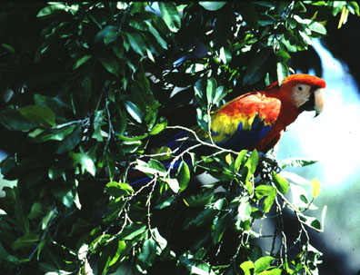 & Rainforest Canopy Birding with Treetop Explorations